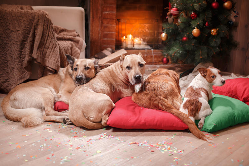 Grupo de perros de la raza, compañía de perros el día de fiesta fotos de archivo