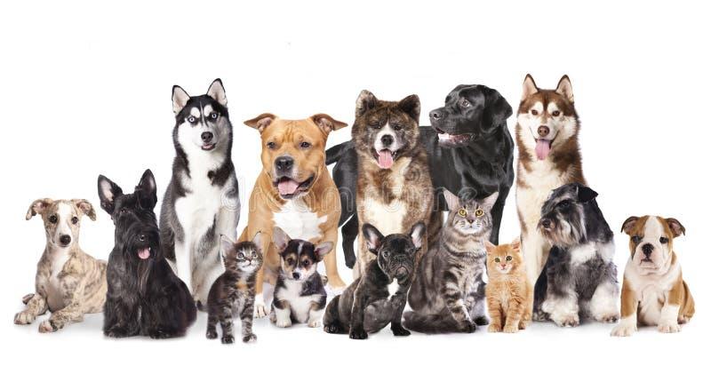 Grupo de perros y de gatos imagen de archivo libre de regalías