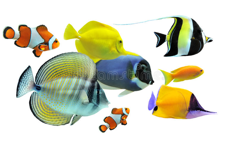 Grupo de pescados fotografía de archivo