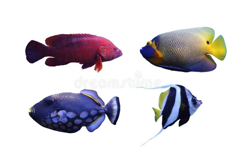 Grupo de pescados fotos de archivo libres de regalías