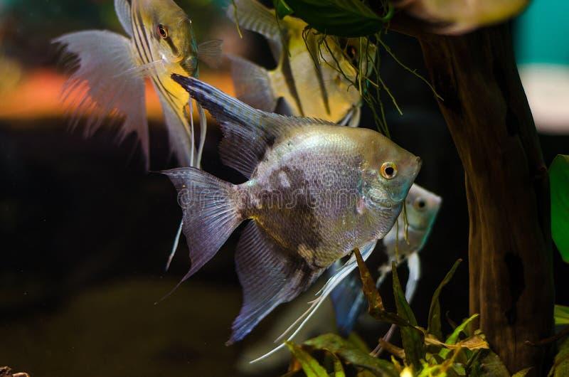 Grupo de pescados de plata foto de archivo