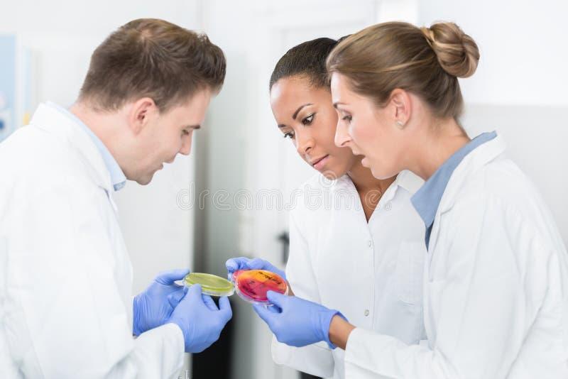 Grupo de pesquisadores do laboratório para produtos alimentares que comparam culturas das bactérias foto de stock royalty free