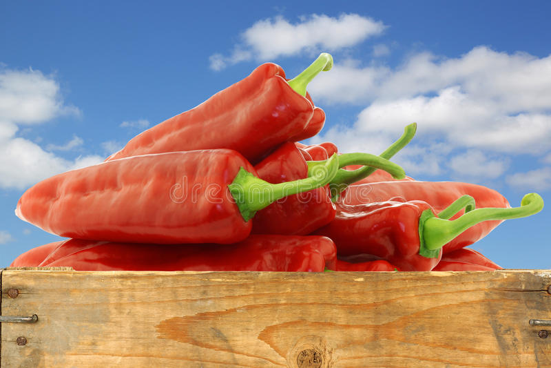 Grupo de pimentos doces vermelhos frescos (capsicum) fotografia de stock royalty free
