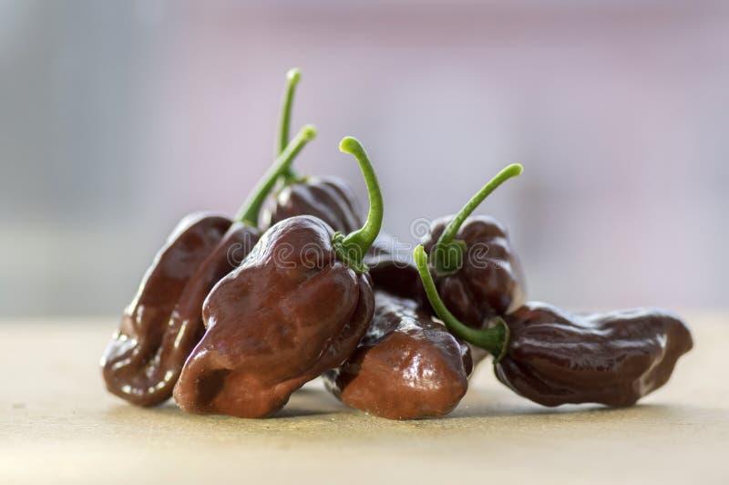 Grupo de pimientos picantes madurados de los chinenses del pimiento mismo en la tabla de madera, chocolate del habanero fotos de archivo