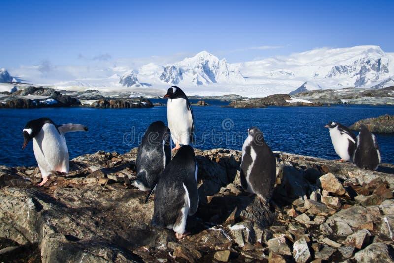 Download Grupo de pinguins foto de stock. Imagem de beleza, nave - 16869176