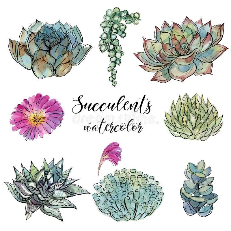 Grupo de plantas carnudas gráficos da aquarela ilustração royalty free