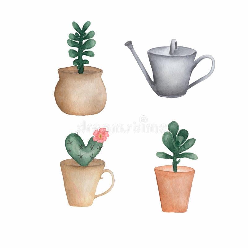 Grupo de plantas suculentos, lata molhando da aquarela do metal do cacto, ilustração isolada da aquarela no fundo branco ilustração do vetor