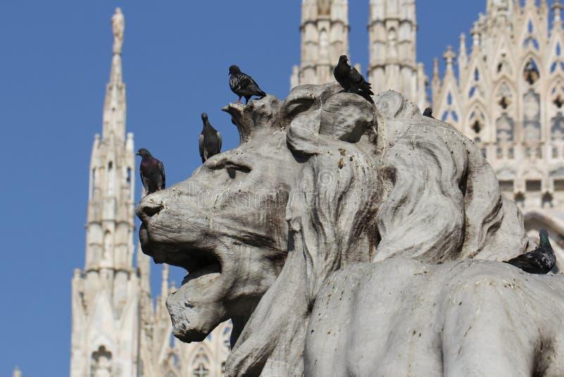 Grupo de pombos na estátua maravilhosa do leão em Piazza Duomo de Milão Itália, sujo da merda pooping do pássaro fotos de stock