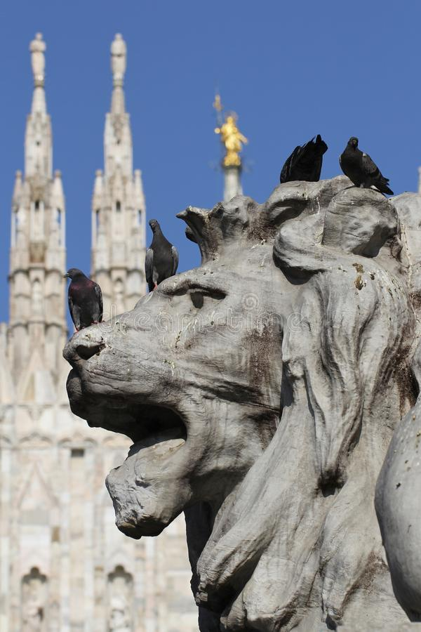 Grupo de pombos na estátua maravilhosa do leão em Piazza Duomo de Milão Itália, sujo da merda pooping do pássaro foto de stock