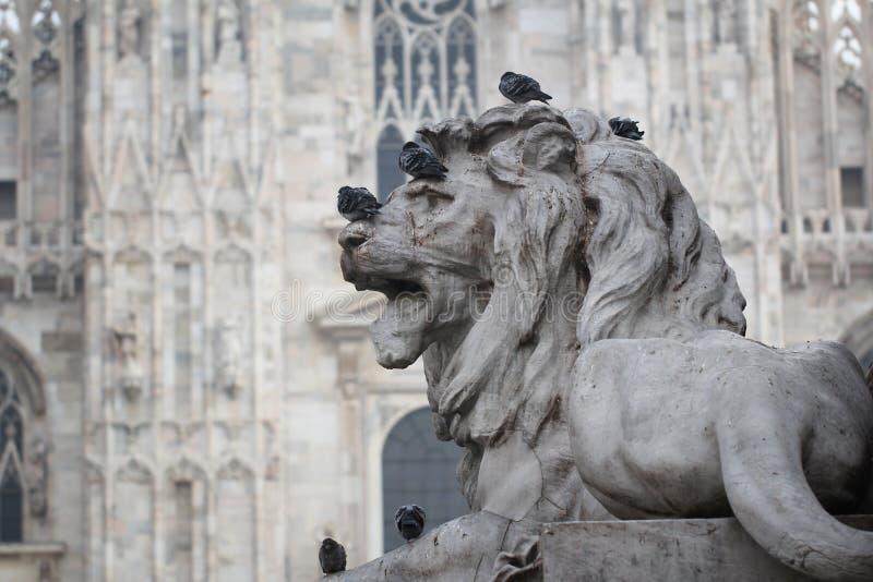 Grupo de pombos na estátua principal do leão em Piazza Duomo de Milão Itália, sujo da merda pooping do pássaro na arte atrativa d imagem de stock royalty free