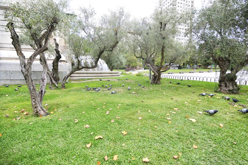 Grupo de pombos no monumento de Miguel de Cervantes do parque no Pla fotos de stock royalty free