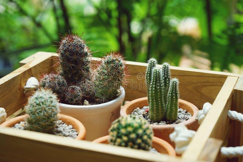 Grupo de poucas plantas de potenciômetro do cacto na caixa de madeira, conceito suculento imagem de stock