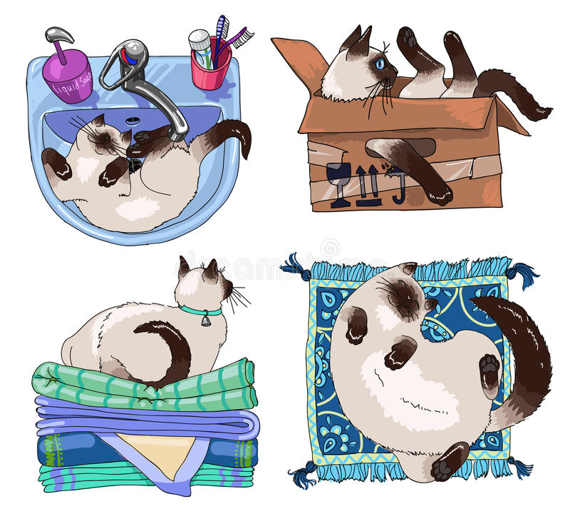 Grupo de quatro gatos siamese que têm o resto ilustração royalty free