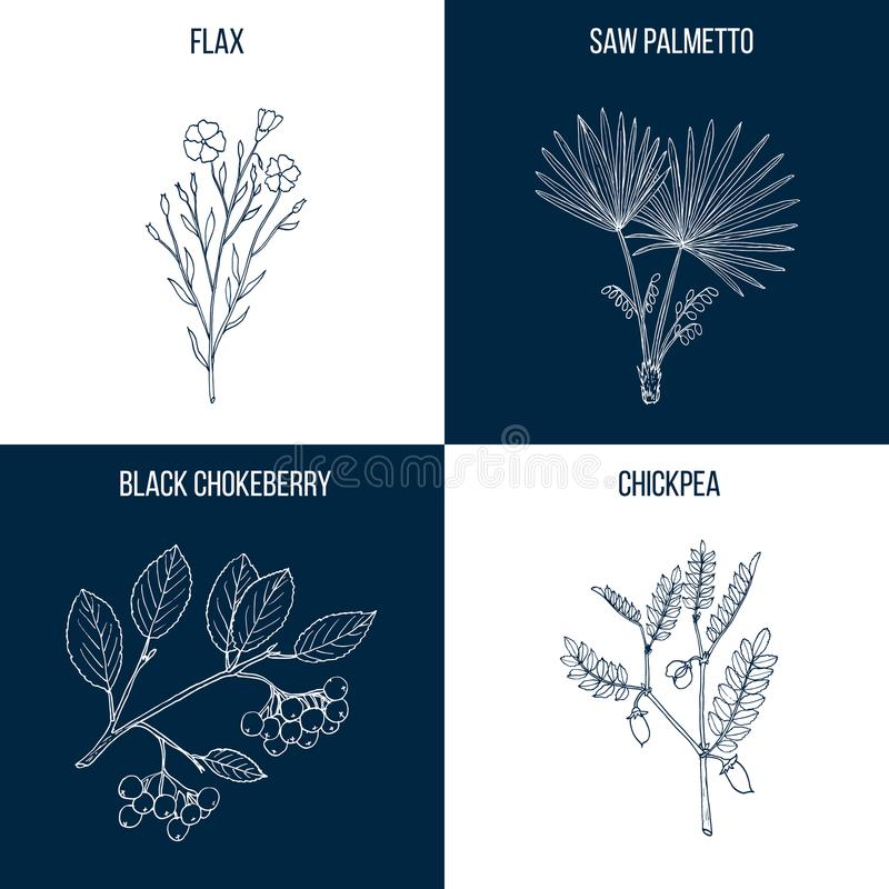 Grupo de quatro plantas comestíveis e medicinais tiradas mão ilustração stock