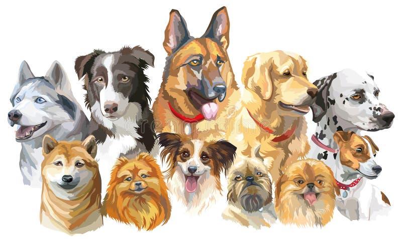 Grupo de raças grandes e pequenas do cão ilustração royalty free