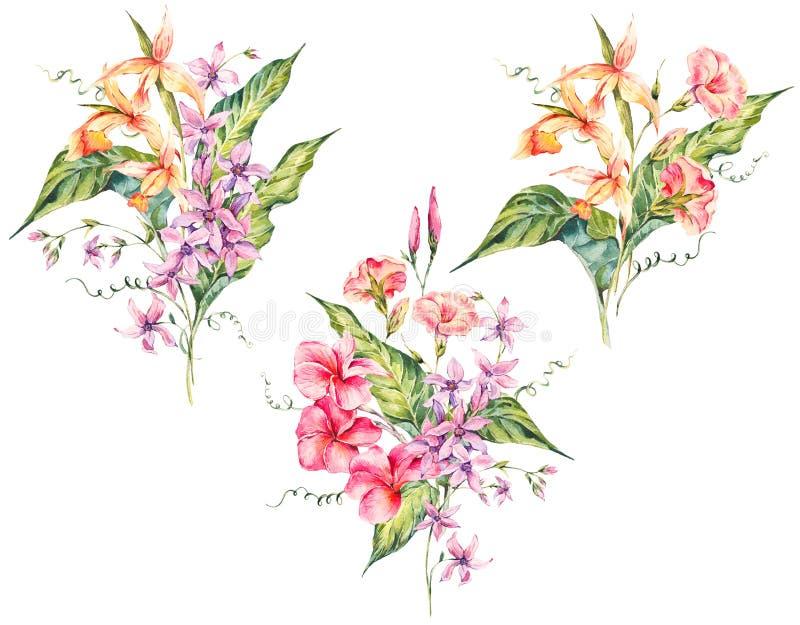 Grupo de ramalhete floral do vintage tropical da aquarela do fluxo exótico ilustração royalty free