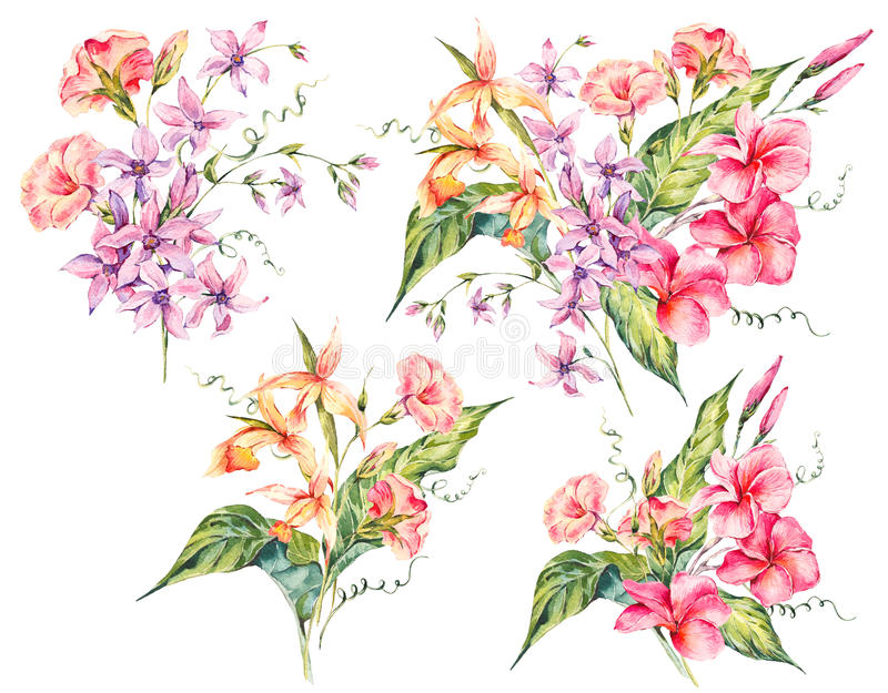 Grupo de ramalhete floral do vintage tropical da aquarela do fluxo exótico ilustração stock