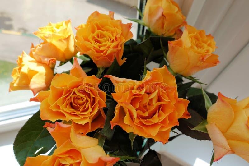 Grupo de rosas bonitas vermelhas e alaranjadas fotografia de stock