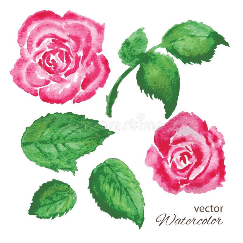 Grupo de rosas da aquarela e de folhas do verde ilustração royalty free