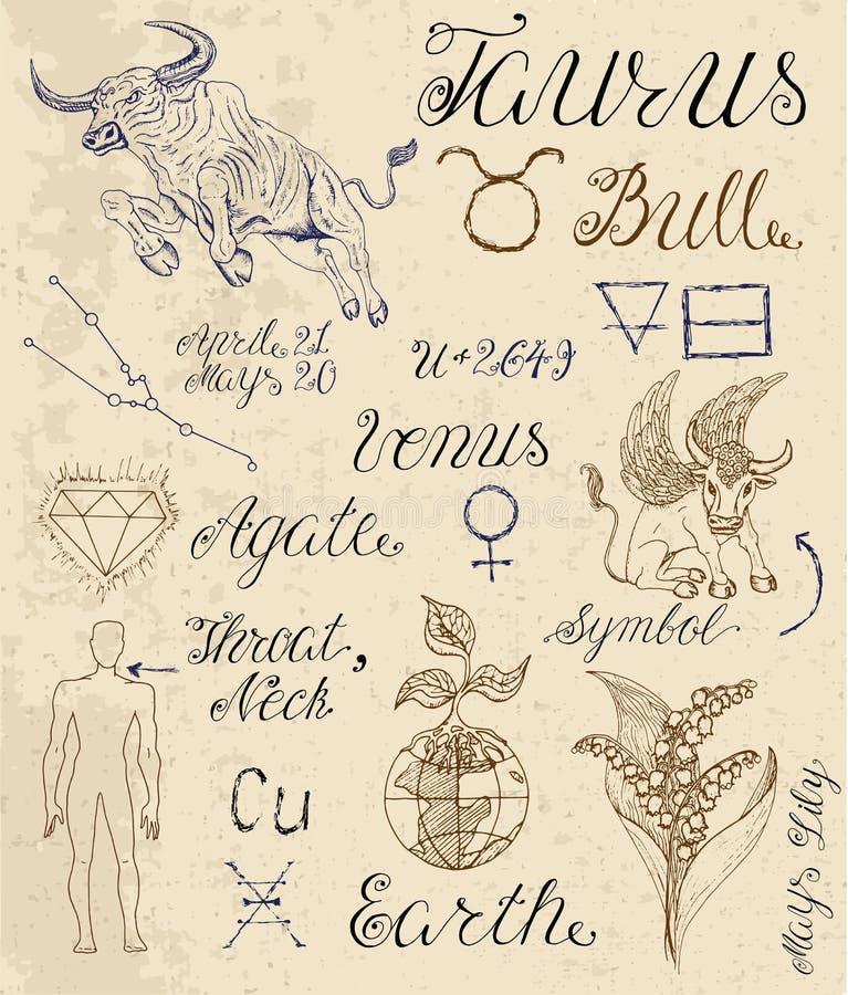 Grupo de símbolos para o Touro ou a Bull do sinal do zodíaco ilustração royalty free