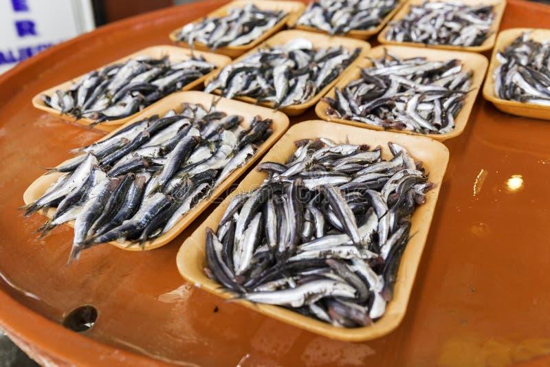 Grupo de sardinhas em um banco colorido para a venda no mercado fresco do marisco foto de stock