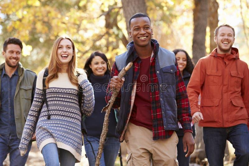 Grupo de seis amigos que caminan junto a través de un bosque fotos de archivo