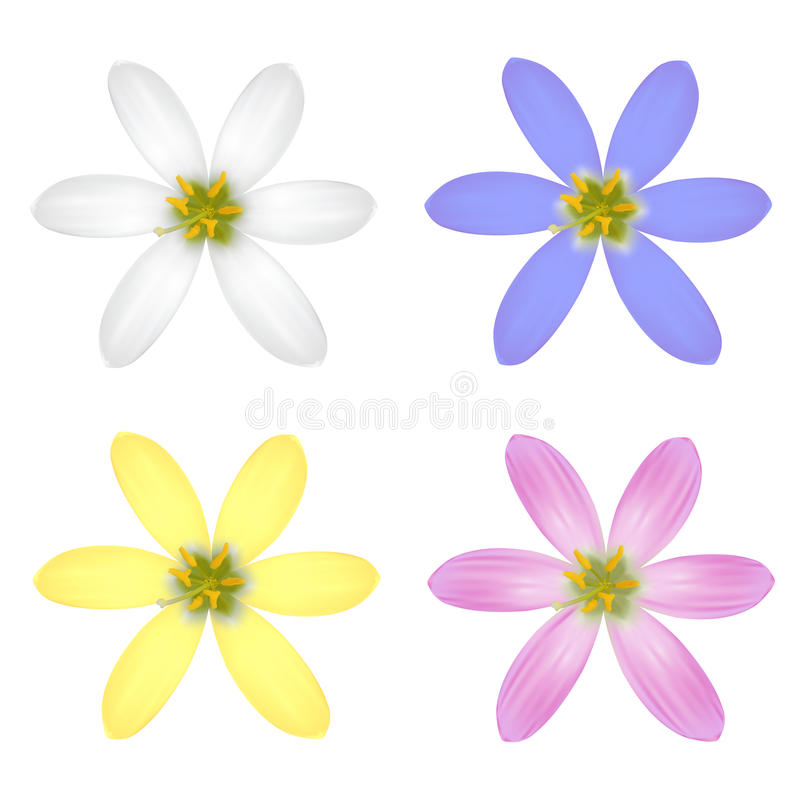 Grupo de seis flores da pétala ilustração royalty free