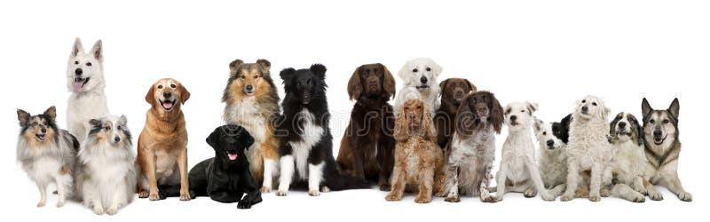 Grupo de sentarse de los perros imagen de archivo
