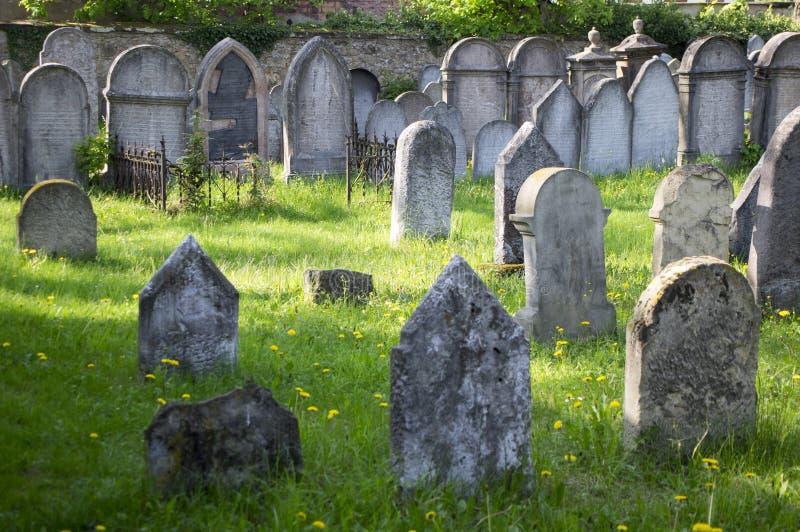 Grupo de sepulcros judíos bien conservados en la hierba verde en luz del sol, pequeño cementerio judío en el mestec de Hermanuv e fotografía de archivo