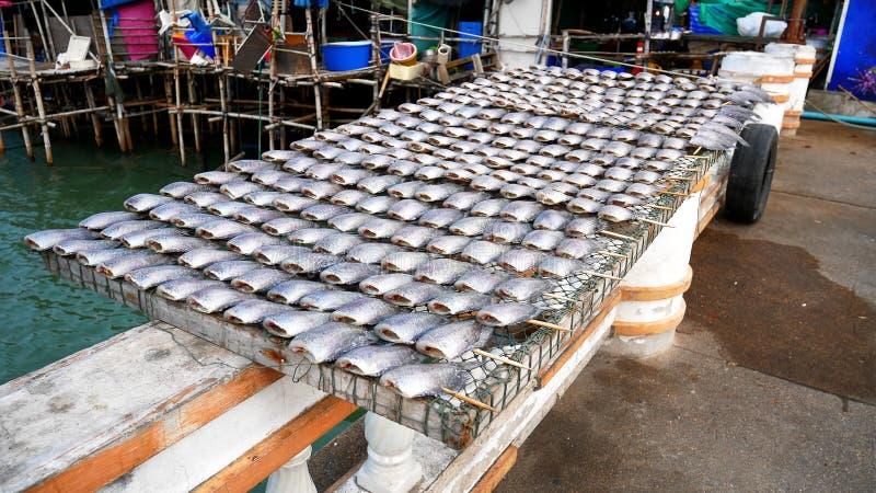 Grupo de sequedad salada de los pescados del Osphromemus gorami en luz del sol fotos de archivo libres de regalías