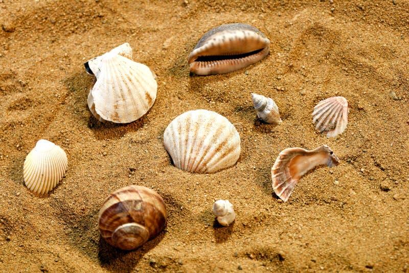 Grupo de shell do mar na areia em uma praia fotografia de stock