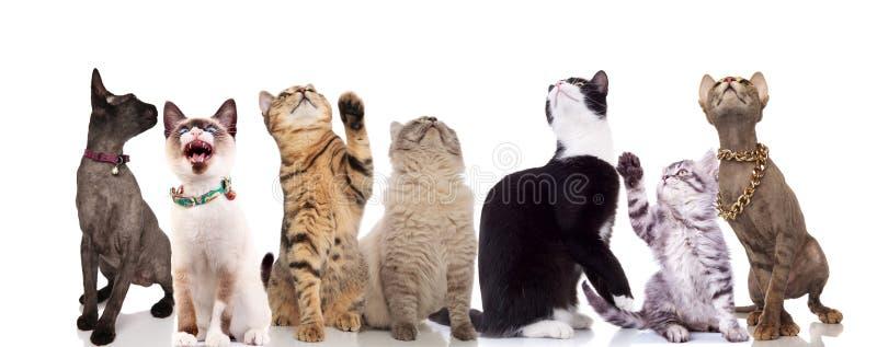 Grupo de siete gatos lindos que miran para arriba fotografía de archivo