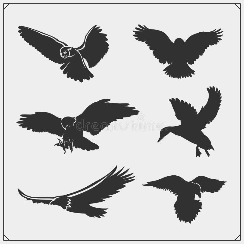 Grupo de silhuetas do pássaro Corvo, águia, coruja, falcão, falcão e pato Projeto da cópia para t-shirt ilustração stock