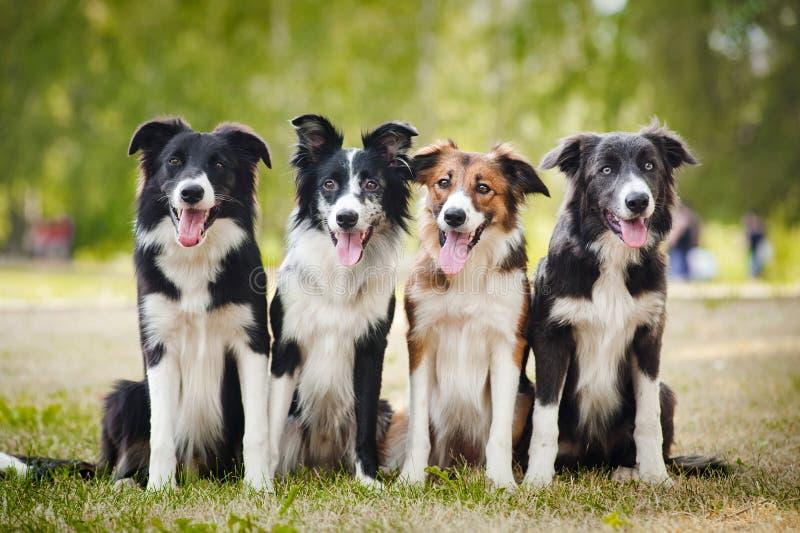 Grupo de sittingon feliz dos cães a grama fotos de stock royalty free