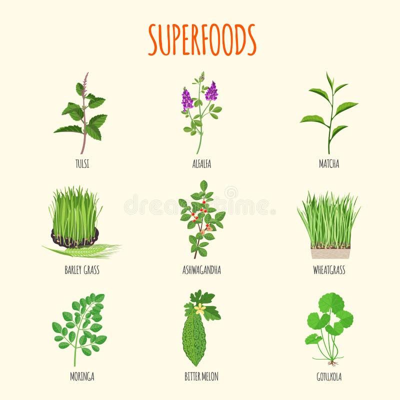 Grupo de superfoods no estilo liso ilustração stock