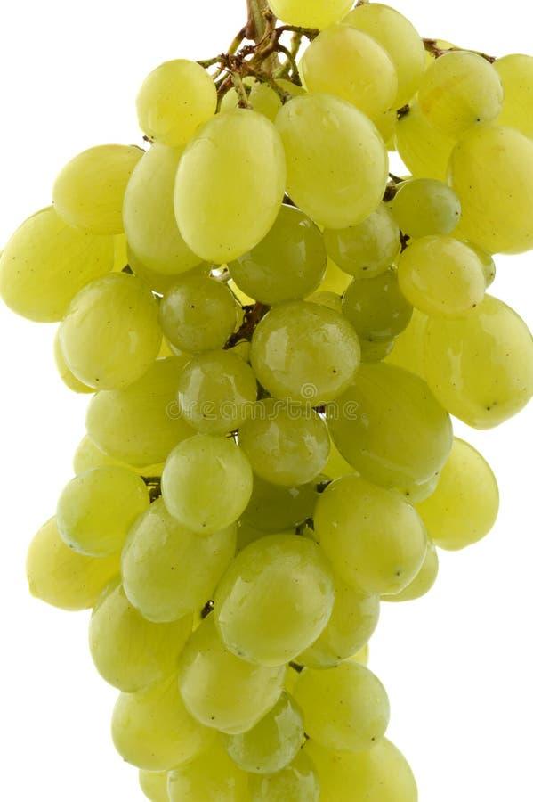 Grupo de suspensão de uvas verdes no branco foto de stock royalty free