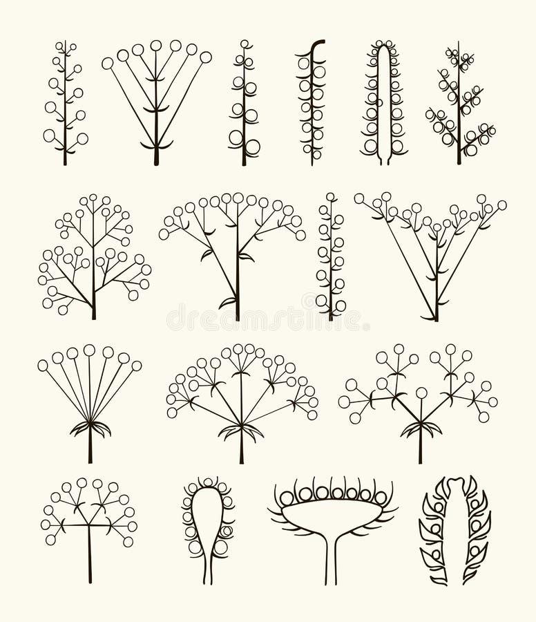 Grupo de tipos diferentes do vetor de inflorescência ilustração do vetor