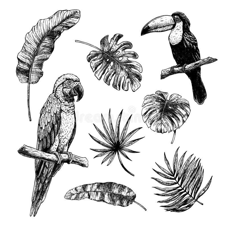Grupo de tiragem de folhas tropicais com pássaros tucano e papagaio da arara Esbo?o do vetor Impress?o digital ilustração royalty free