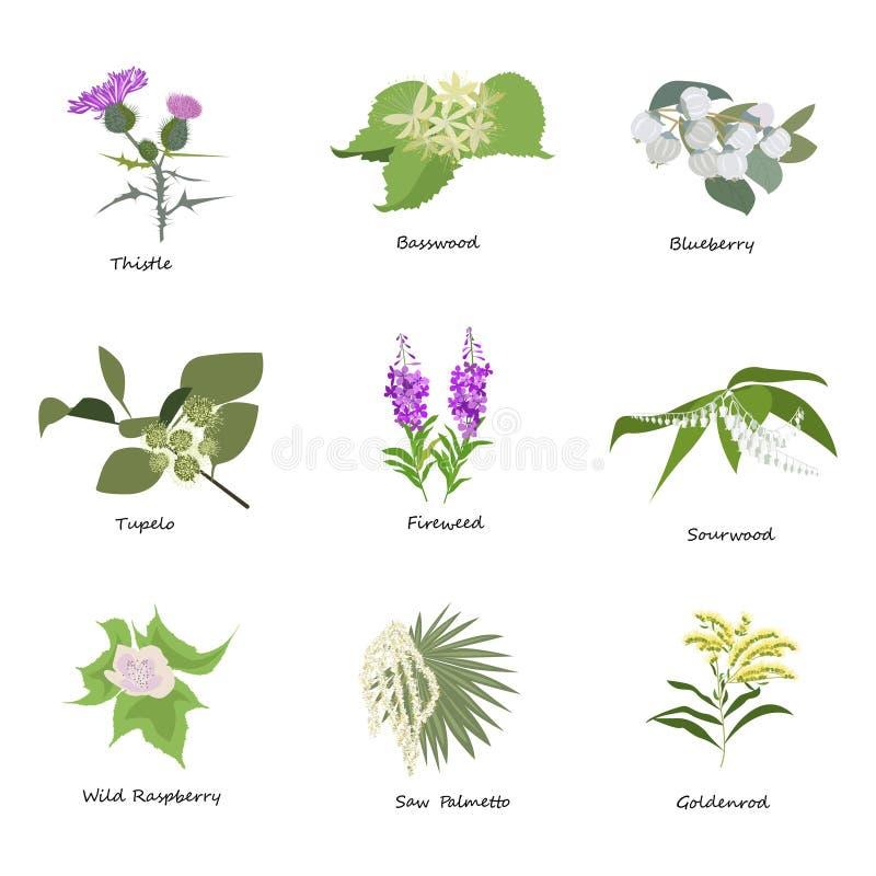 Grupo de tirar flores selvagens, ilustração royalty free