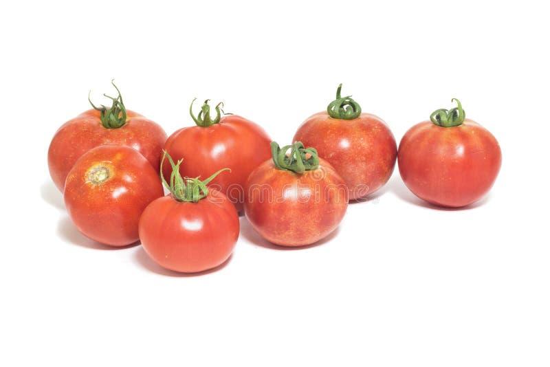 Grupo de tomates frescos, vermelhos isolados no fundo branco imagem de stock