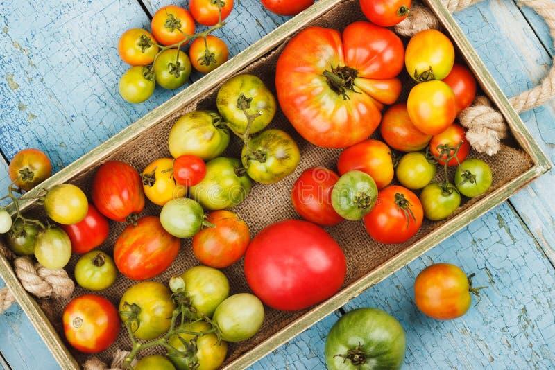 Grupo de tomates maduros na bandeja de madeira, fundo de madeira azul imagens de stock royalty free