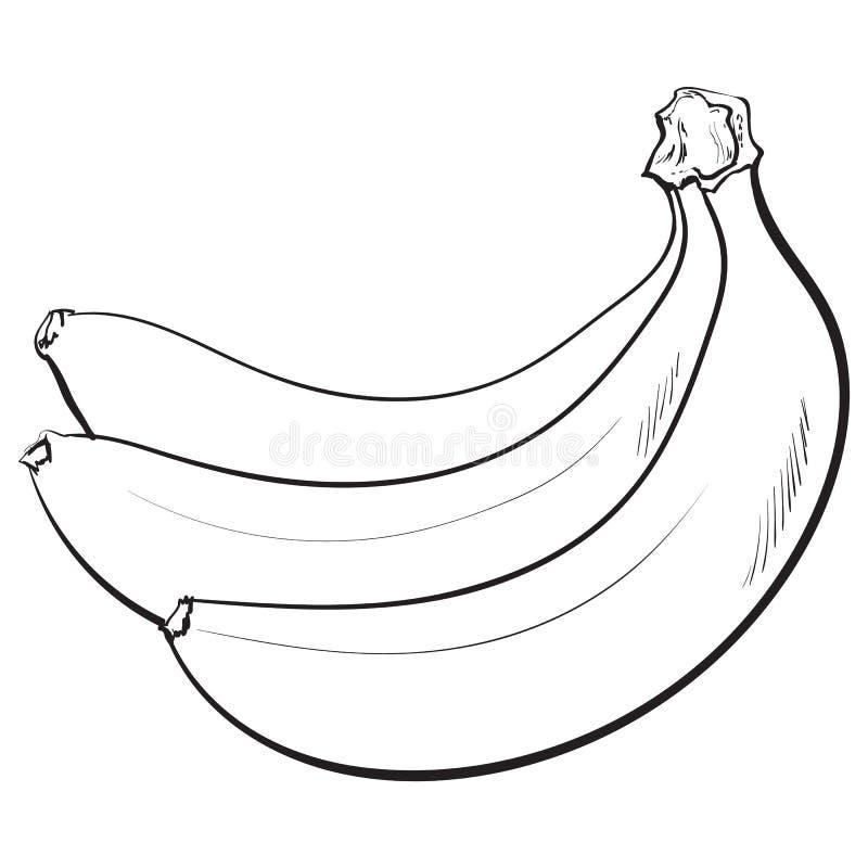 Grupo de três fechados, bananas maduras unpeeled, ilustração do vetor do esboço ilustração do vetor