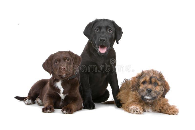 Grupo de três filhotes de cachorro fotografia de stock