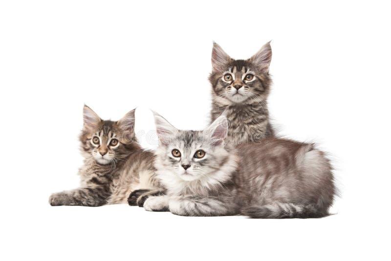 Grupo de três gatinhos fotos de stock royalty free