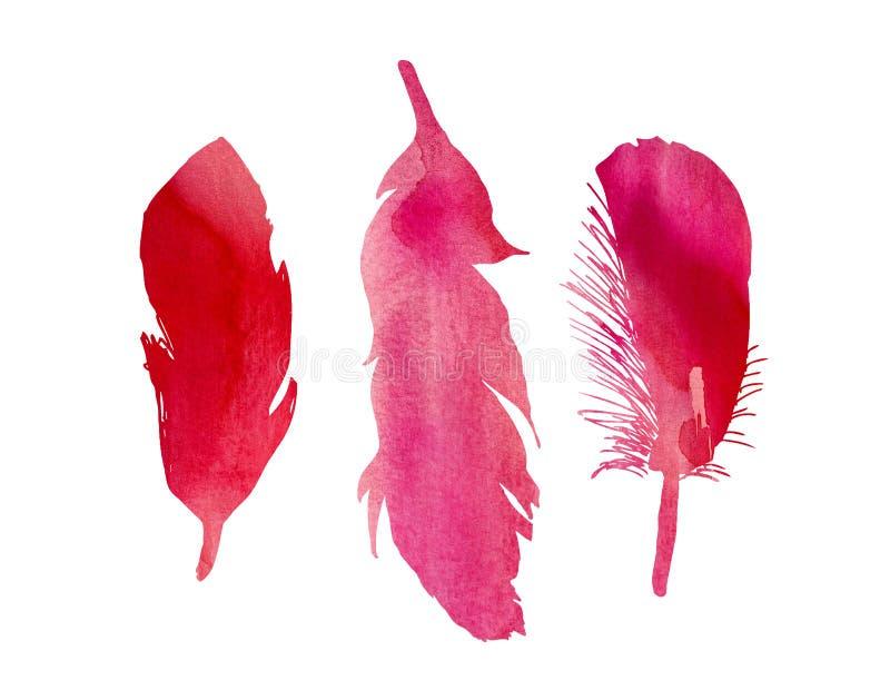 Grupo de três penas de pássaro fúcsia cor-de-rosa vermelhas da aquarela ilustração stock