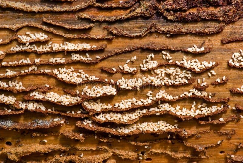 Grupo de trabajo de las hormigas. foto de archivo libre de regalías