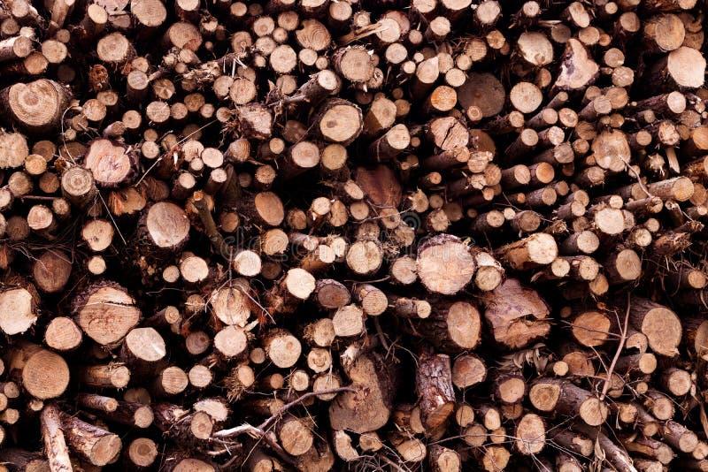 Grupo de troncos marrons empilhados na forma da pirâmide no outono com céu nebuloso imagem de stock royalty free