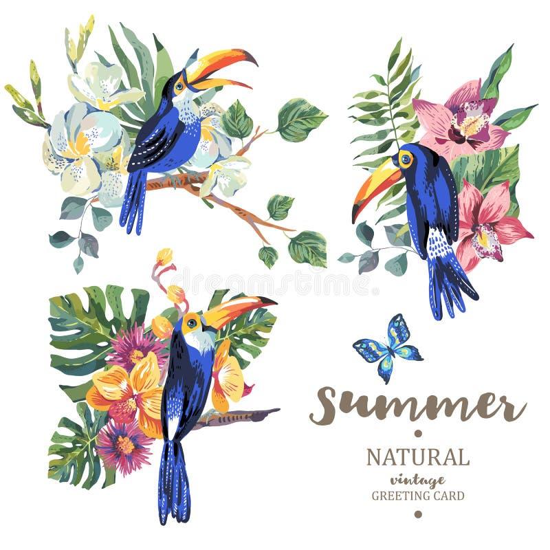 Grupo de tucano, de borboletas e de flores do vetor do verão do vintage ilustração do vetor
