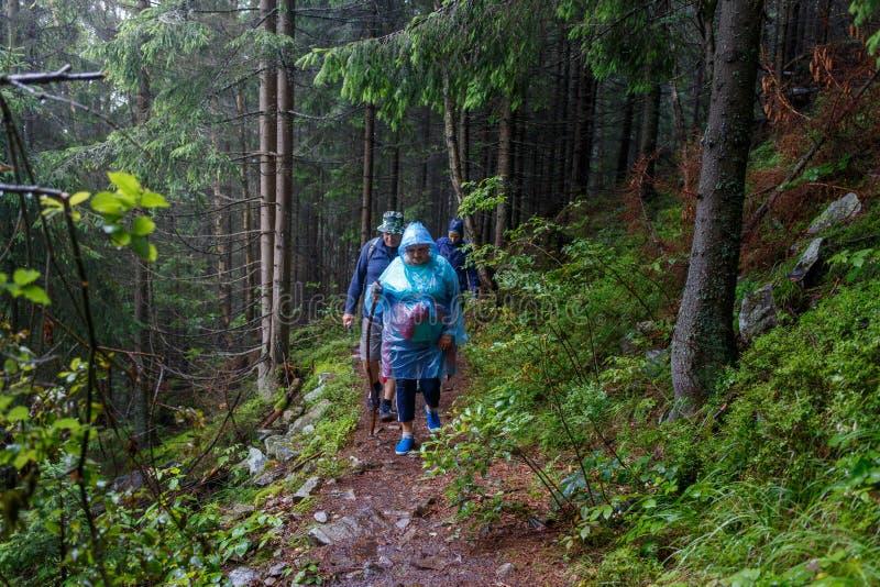 Grupo de turistas superiores que caminham na floresta chuvosa imagem de stock