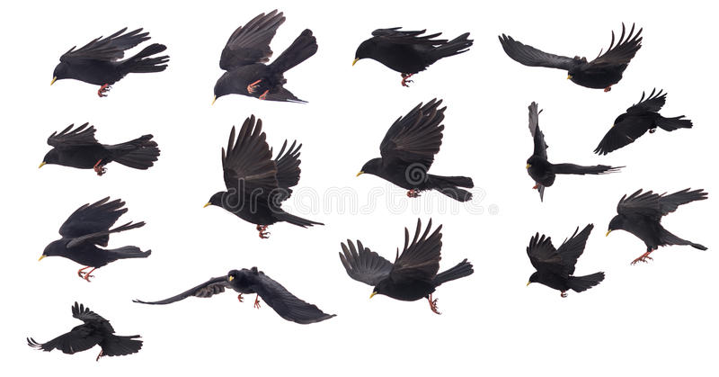 Grupo de uma compilação do pássaro no fundo branco imagens de stock
